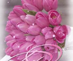 Тюльпаны в день Рождения