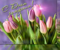 Картинка с днём Рождения букет тюльпанов